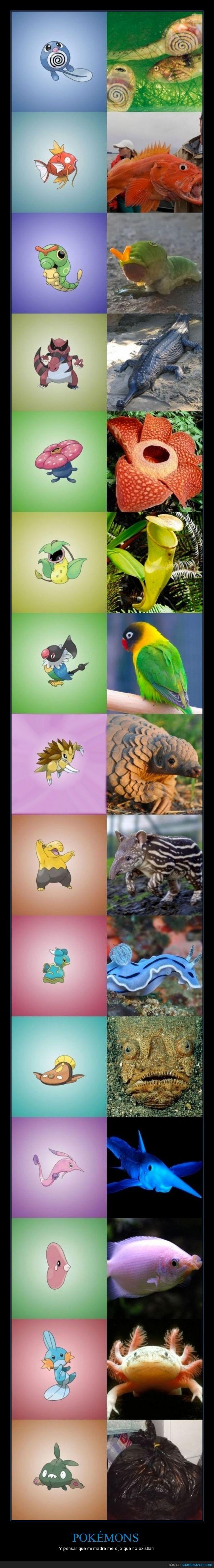 animal,basuramon,existe,inspiracion,pokemon,real,tipo,verdad