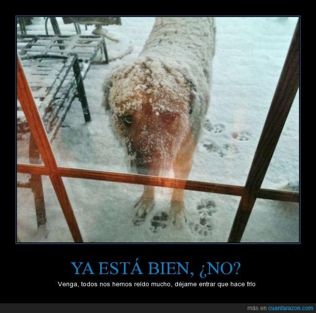 esperar,frio,fuera,mirada,nieve,odio,perro,triste