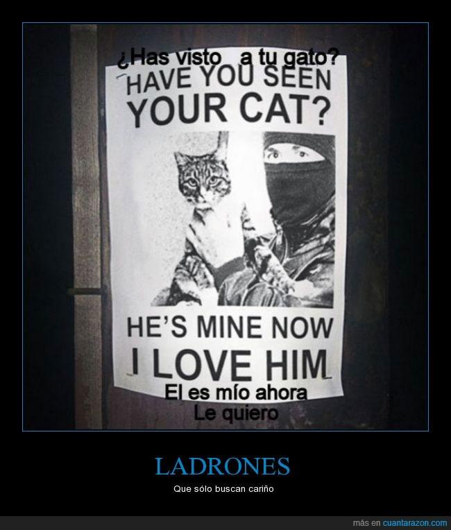 cariño,cartel,gato,Ladrón,robar