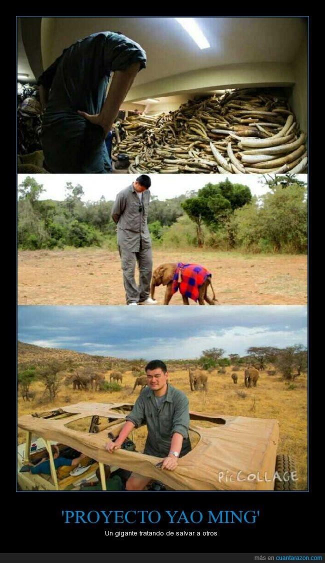 Caza furtiva para obtener marfil,Documental,Generar conciencia mundial,Yao Ming