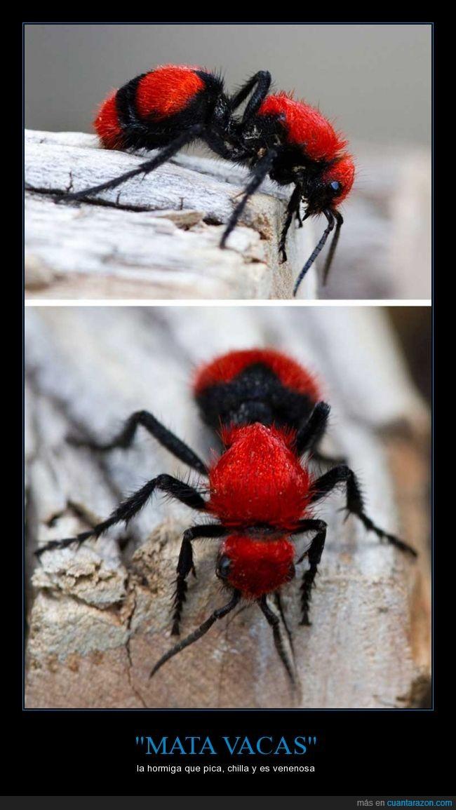 araña,gritar,hormiga,matar,negra,peluda,qué repelús la hostia,roja,vaca,veneno,venenosa