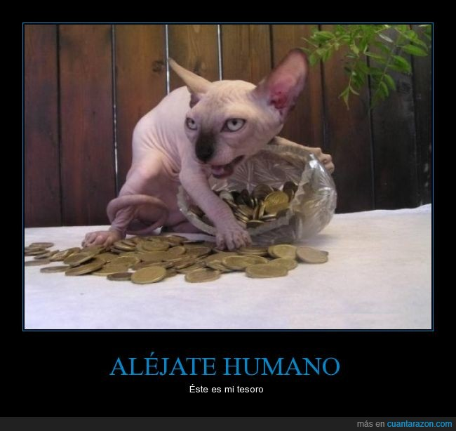 dinero,gato,horrible,Lord of The Rings,monedas,pelo,precioso,sphynx,tesoro