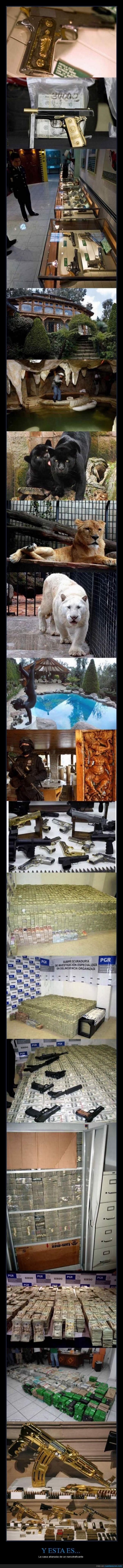allanar,armas,billetes,casa,detener,dinero,droga,millones,narco,narcotraficante,oro,privada,propiedad,zoo
