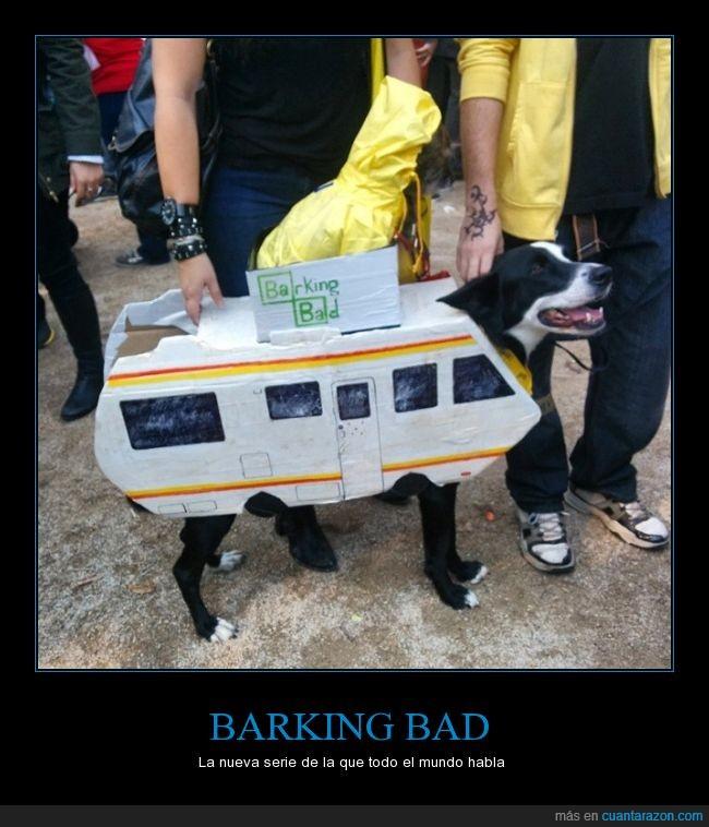 autocaravana,barking bad,breaking bad,caravana,disfraz,perro