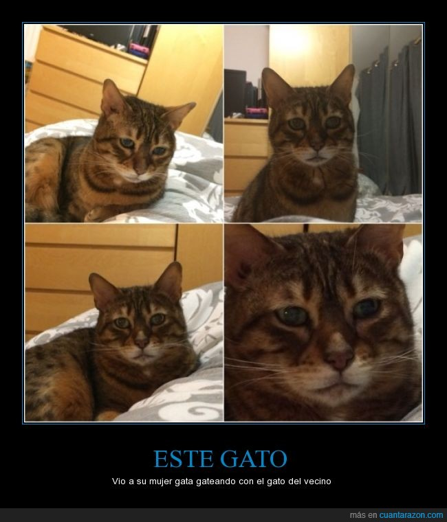 gato,mirada,profunda,triste,tristeza