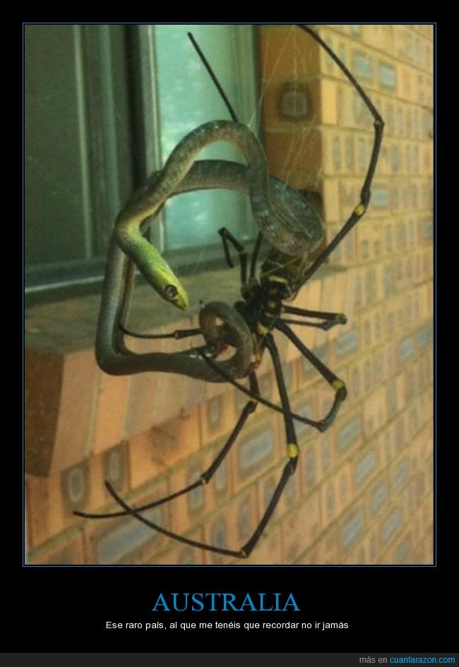 araña,cazar,gigante,matar,miedo,serpiente,tela de araña,WTF