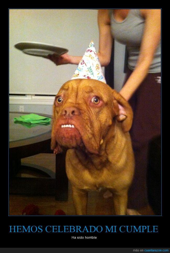 asustado,cara,cumpleaños,perro,susto,trauma