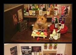 Enlace a HAMSTERS