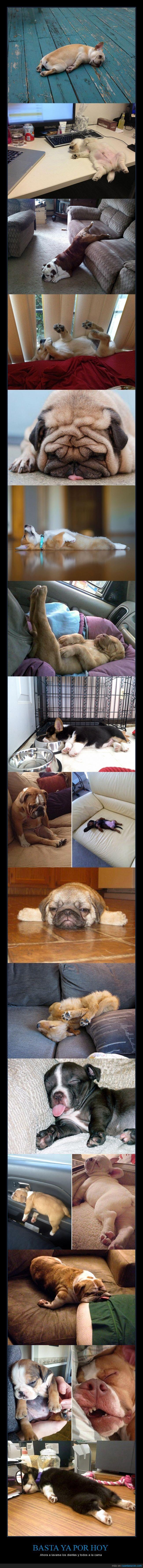 aguantar,cachorros,caer,dormido,dormir,perro,sueño