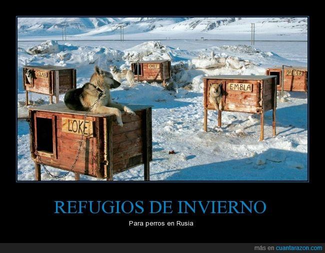 alojo,canes,casa,frío,Nieve,perros,refugio,resguardar,resguardo,Rusia