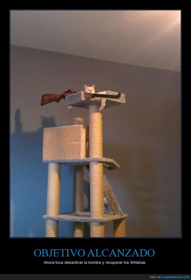 alto,arriba,escopeta,gato,pistola,rascador,rifle,whiskas