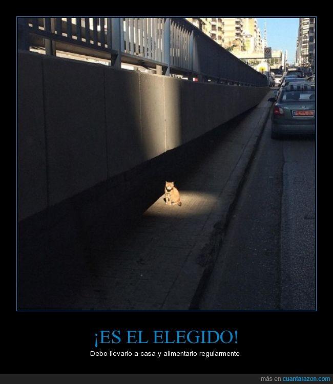 alimentar,calle,casa,elegido,gato,iluminado,llevar,luz,regularmente