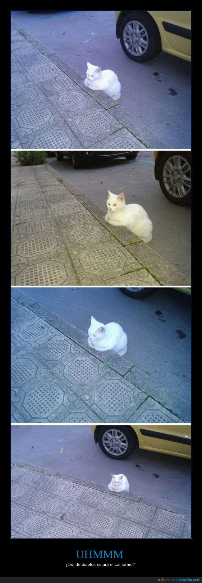acera,bordillo,camarero,esperar,gato