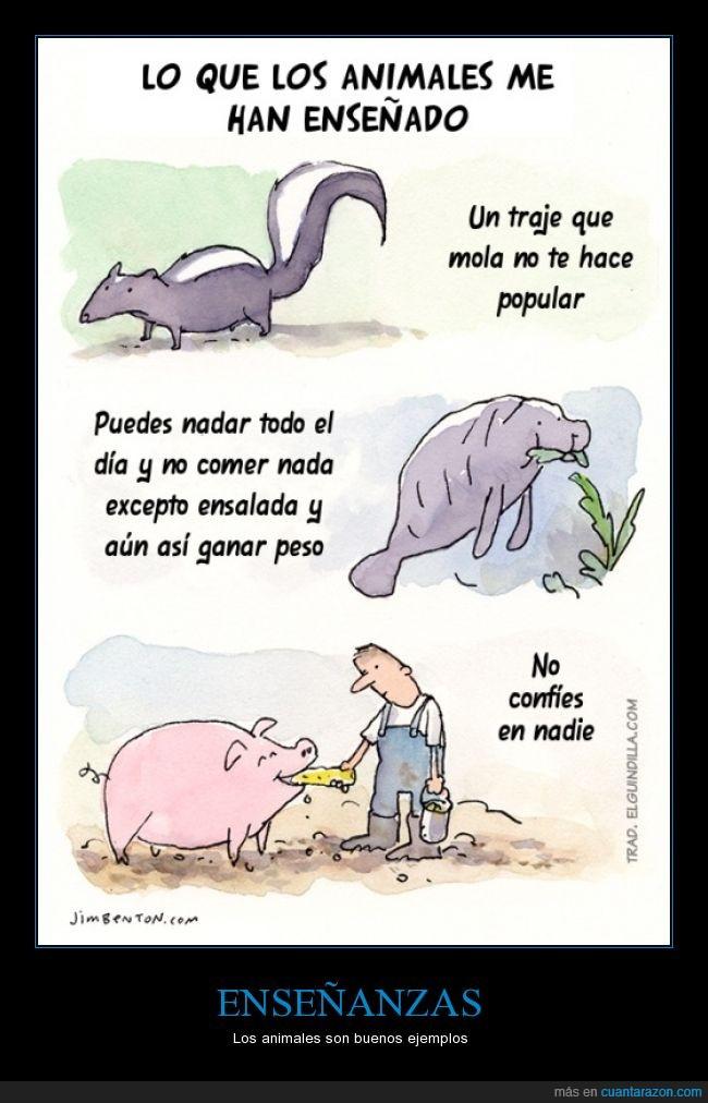 animal,cerdo,comer,confiar,enseñanza,foca,mofeta,nadar,traje,verdura