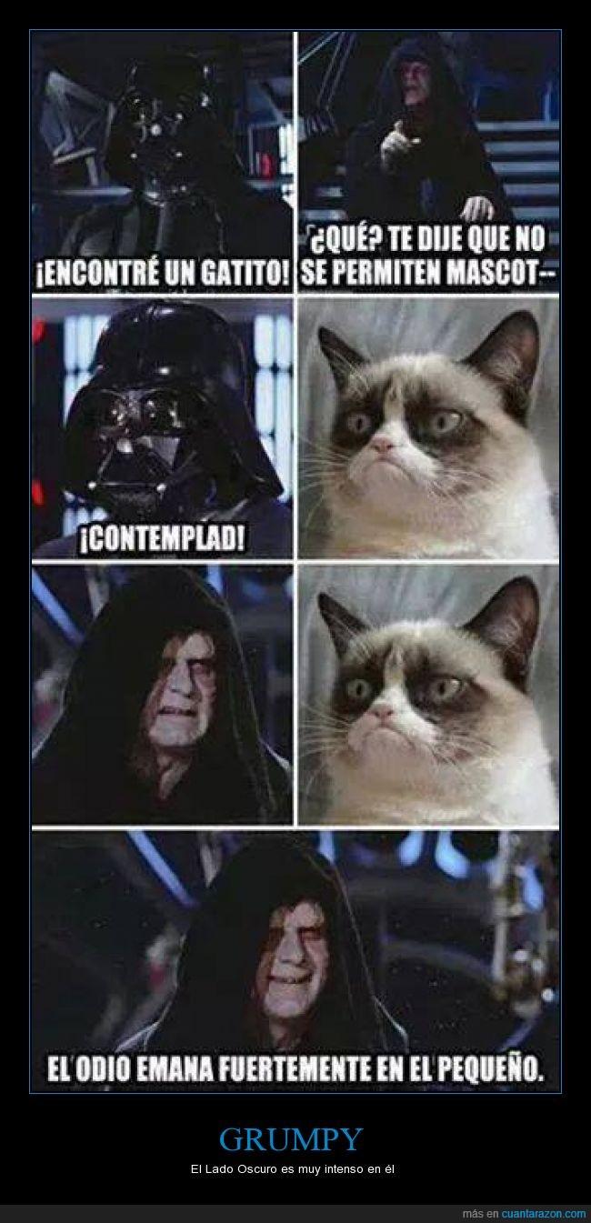 darth vader,gato,grumpy,maestro,sidious,star wars
