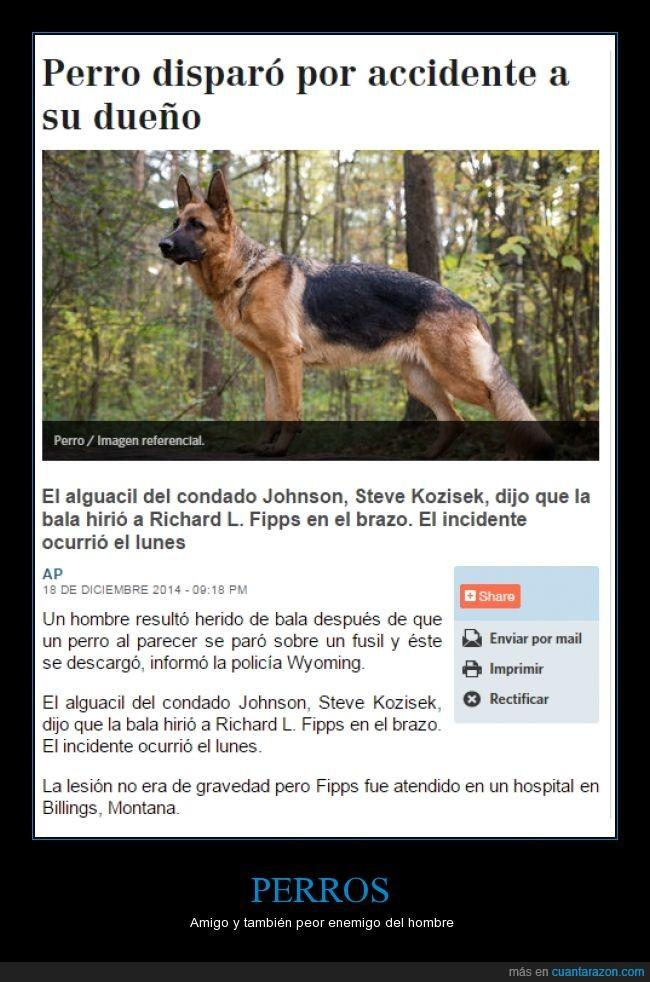 Arma,Bala,Daño.,disparar,Estados Unidos,Hospital,Mascota,Perro