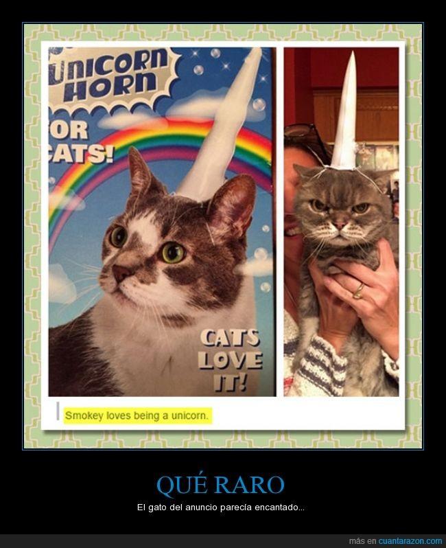 cuerno,engantado,gato,gustar,love,miedo,odio,unicornio