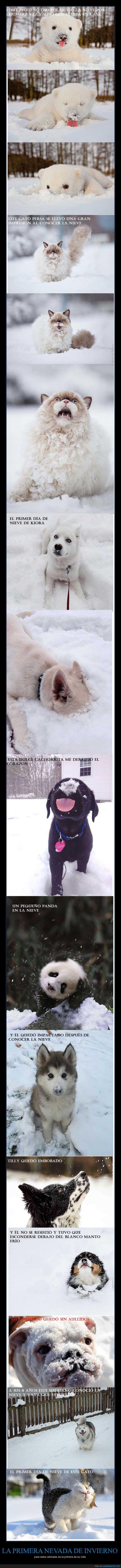 animales,frio,gatos,nieve,osos,panda,perro,ternurita