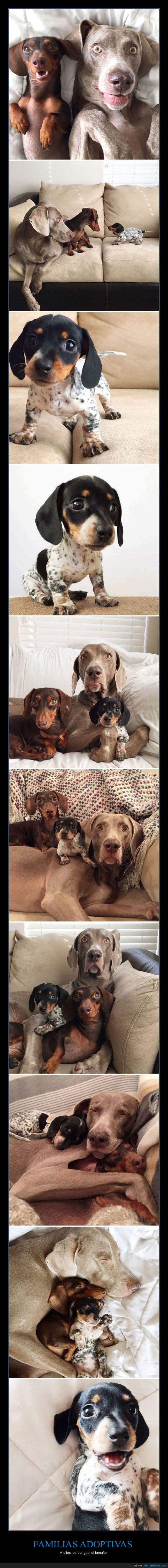 adoptar,amigo,cachorro,familia,grande,hermanito,hermano,pequeño,perro