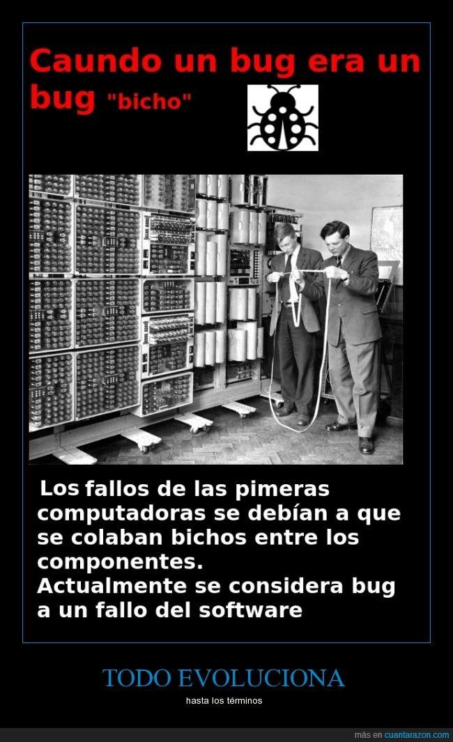 bicho,Bug,informatica,insecto,ordenador,real
