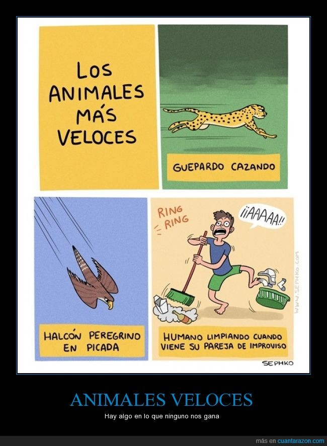 aguila,guepardo,halcon,improviso,limpiando,limpiar,limpieza,pareja,rapido,sopresa,velocidad