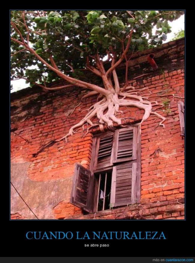 abandonada,árbol,casa,empuje,increible,ladrillo,tierra,vida