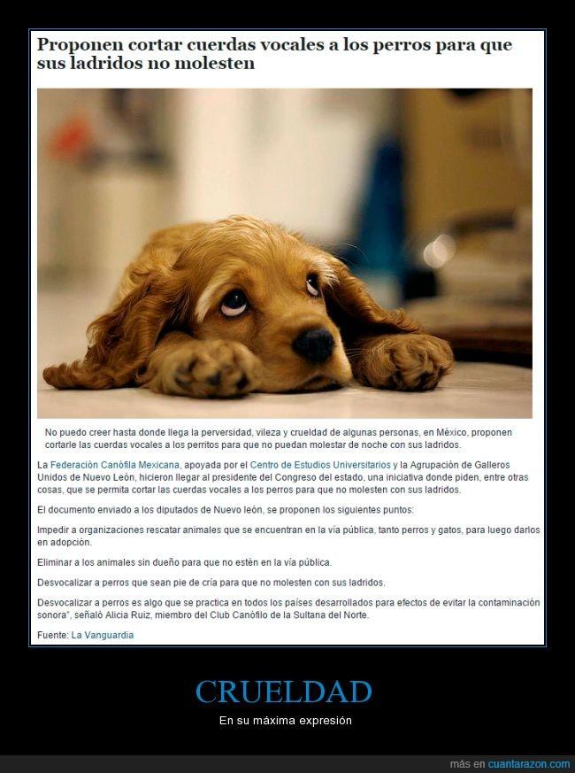 animales,callejeros,cortar,crueldad,cuerdas vocales,gatos,ladrar,ley,méxico,perros