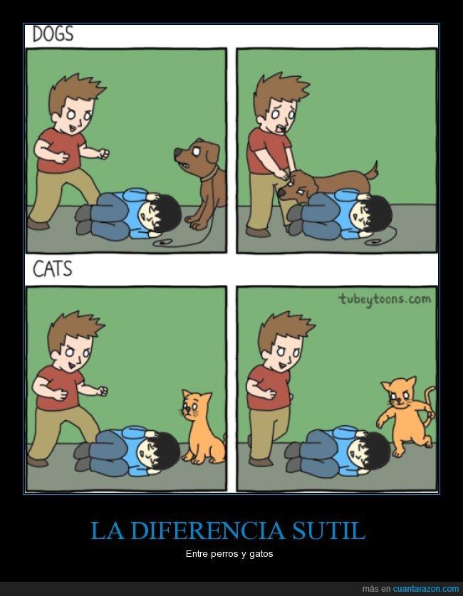 actitud,ayudar,can,caricatura,cómic,felino,gato,perro,rematar,salvar