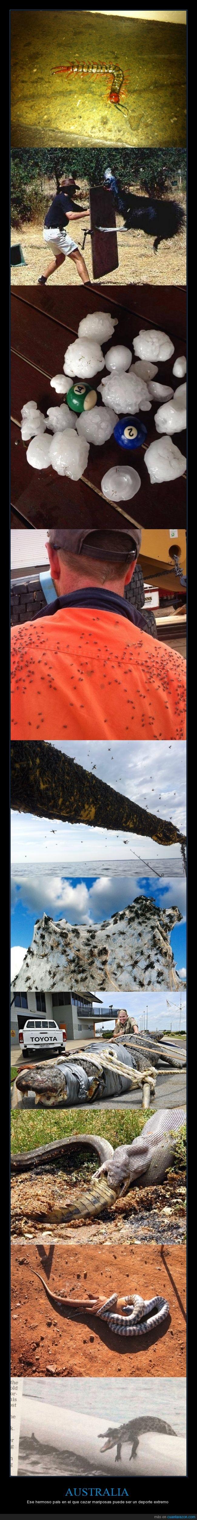 animal,ataque,Australia,Cocodrilos,granizo,naturaleza,No se que es lo de la tercera imagen,Oye tío tienes un mosquito en la espalda,serpiente