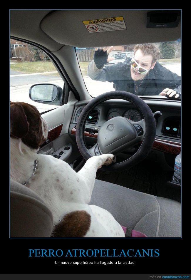 atropella,bacala,cani,choni,coche,conducir,perro,queja