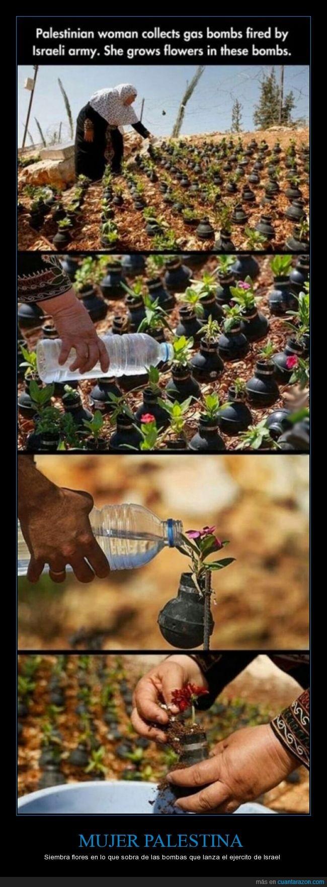 bomba,casquillo,flor,gaza,guerra,guerra de libro,Israel,planta,plantar,resistir
