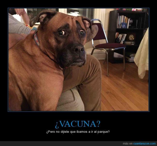 can,cara,expresión,miedo,Molly,perro,susto,triste,vacuna