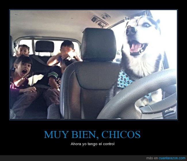 coche,conducir,control,Husky,niños,peligro,perro