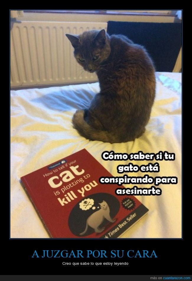 asesino,cara,gato,leer,libro,mirar,odio,saber