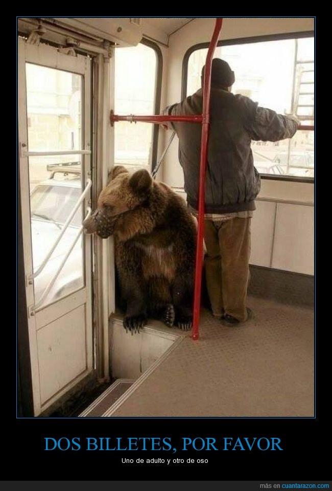 autobús,oso,Rusia