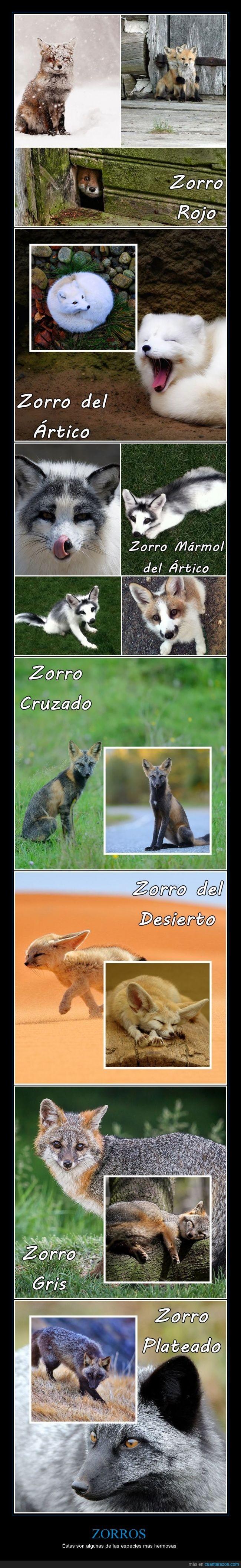 animal,especie,tipo,zorro