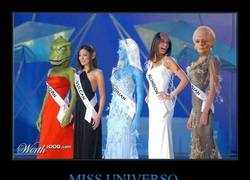 Enlace a MISS UNIVERSO