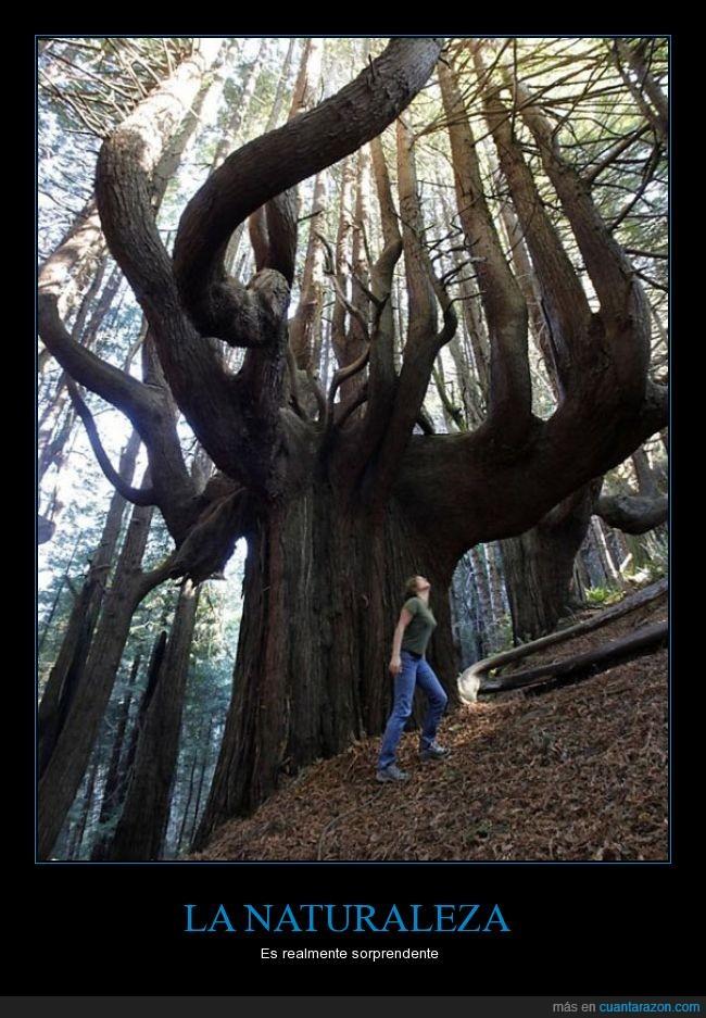 arbol,bosque,colosal,gigante,rama,red,tronco