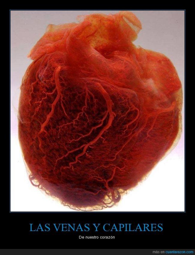 amor,capilares,Corazón sin grasa ni cartílagos,sangre,venas,vida