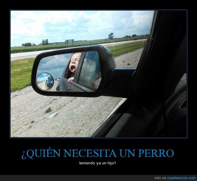 bebé,coche,niño,perro,velocity face,ventana,ventanilla,viento