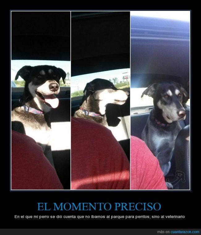cara,decepción,perro,triste,tristeza,veterinario