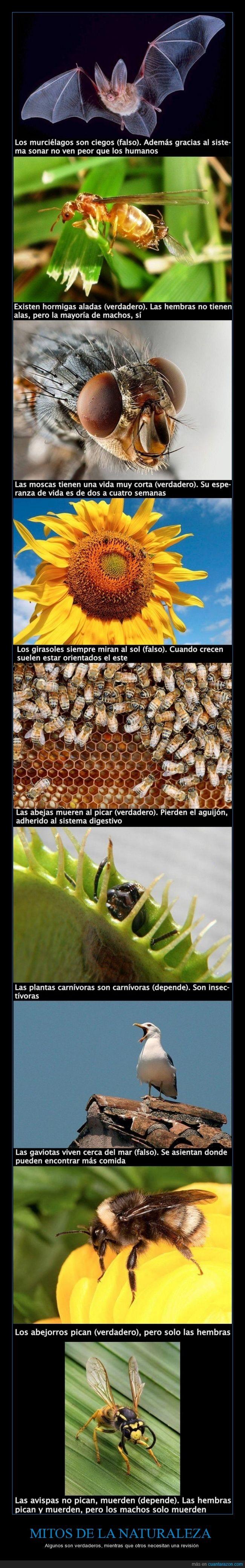 abejas,abejorros,avispas,ciegos,curioso,gaviotas,girasoles,hormigas aladas,Mitos de la naturaleza,moscas,Murciélagos,plantas carnívoras,realidad científica