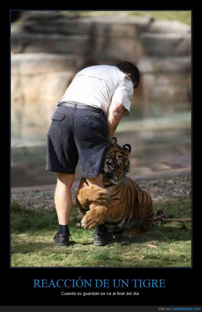 abrazar,aguantar,amigo,animales,cuidador,evitar,parar,tigre,yo me quedo con el