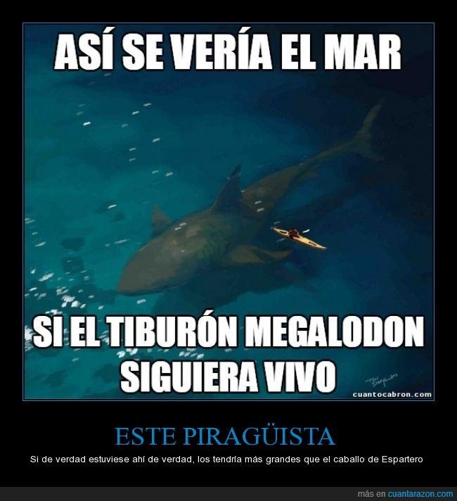 curiosidades,gigante,megalodon,piragüista,tamaño,tiburon,valiente