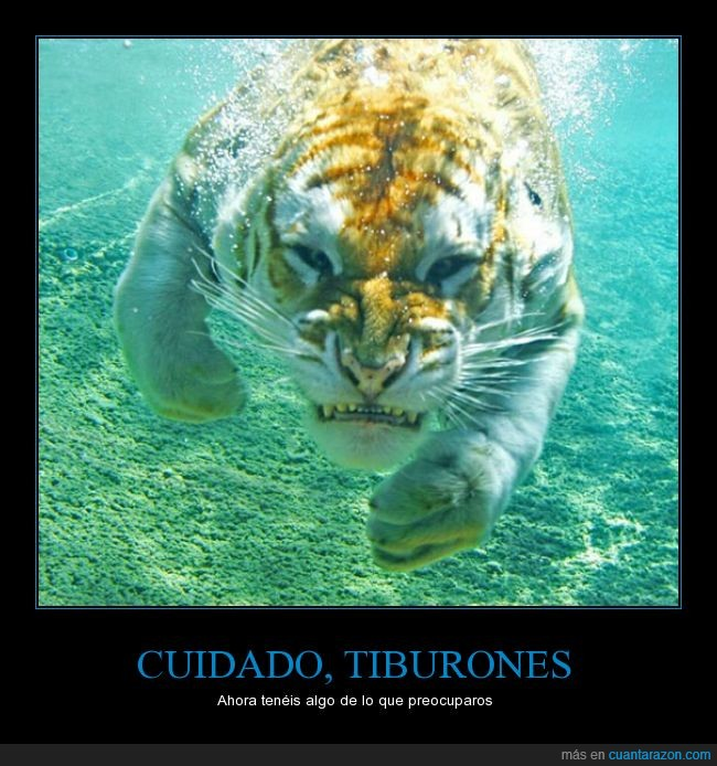 agua,preocuparse,submarino,tiburon,tigre