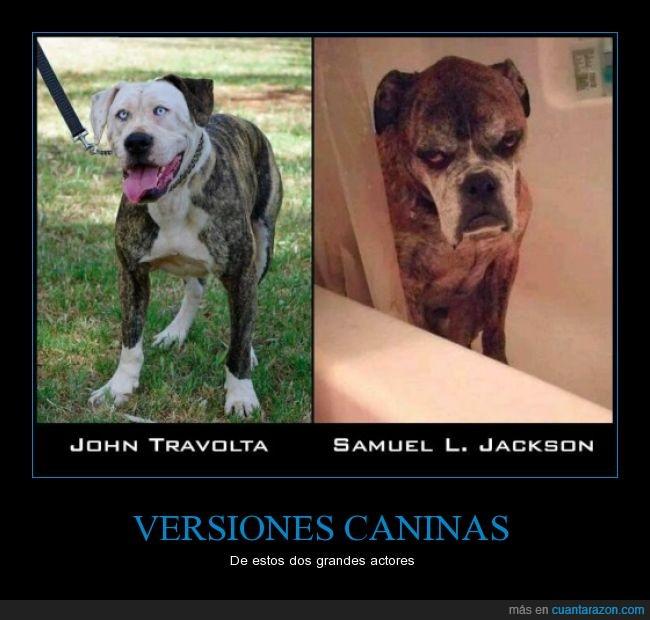 actores,canes,clavado,humor,parecido,película,perros,Samuel l. Jackson,Travolta