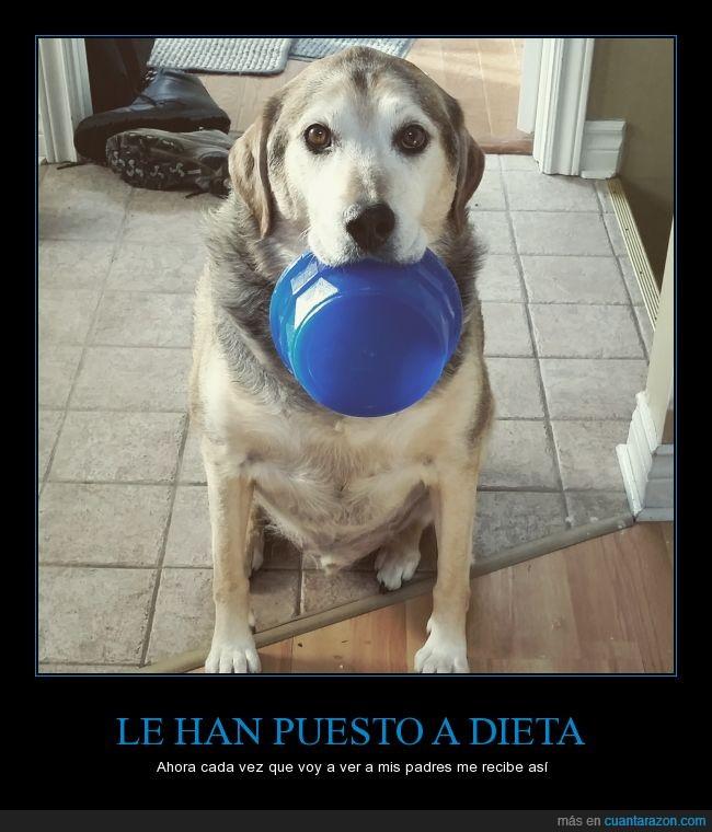 comer,comida,dieta,hambre,pedir,perro,plato,pobrecillo,triste