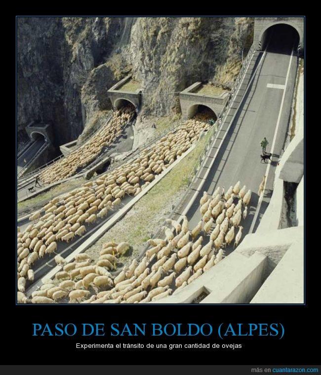 Italia,ovejas,paso de San Boldo,tráfico,túnel