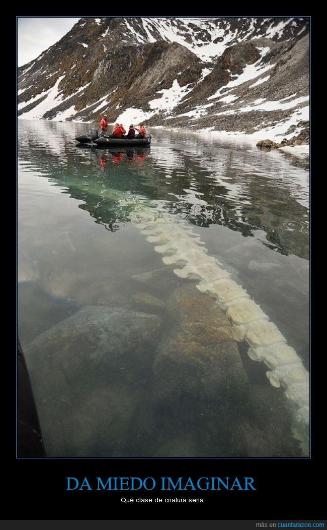 bajo,cola,debajo,dinosaurio,dragon,esqueleto,godzilla,hueso,imaginar,lago,rio
