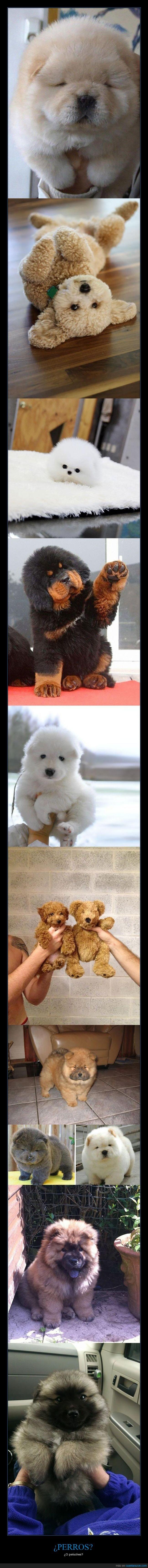 blandito,cachorro,cute,mola,mono,peluche,perro